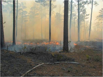 Underbrush fire in a forest