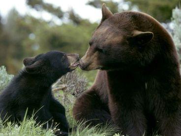 black-bear_233_600x450